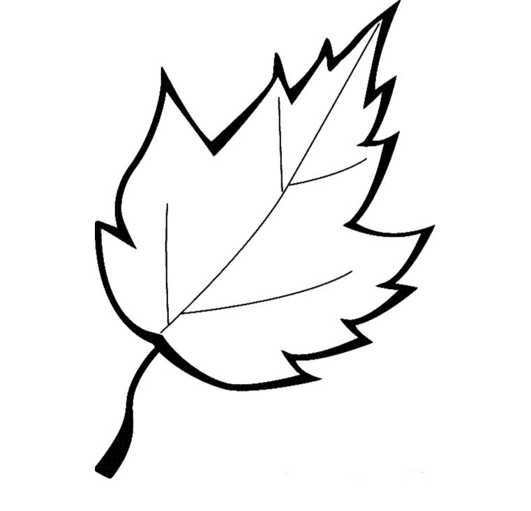 kolorowanka liść
