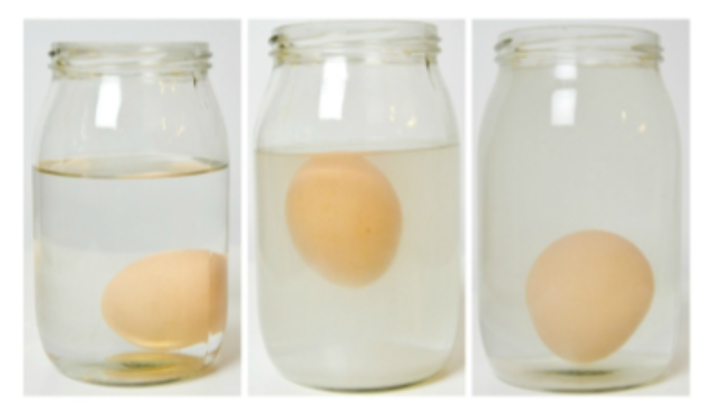 zdjęcie eksperyment jajko