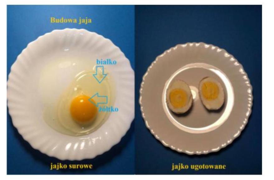 zdjęcie jajko surowe i ugotowane