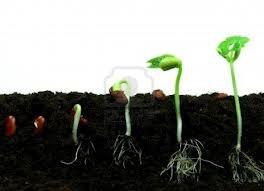 zdjecie jak rośnie roślina od nasiona