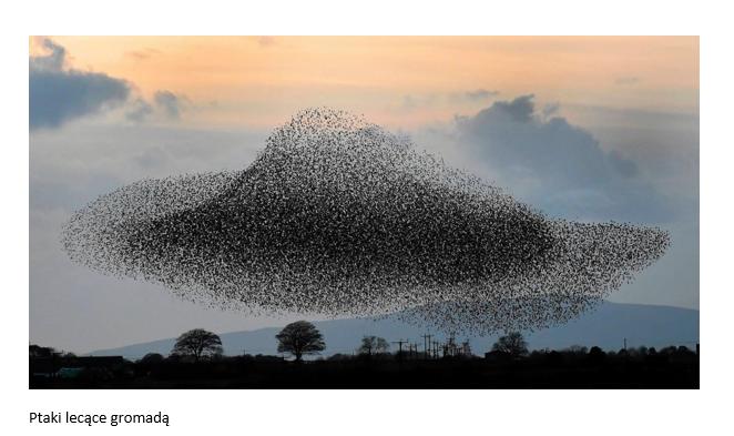zdjęcie ptaków