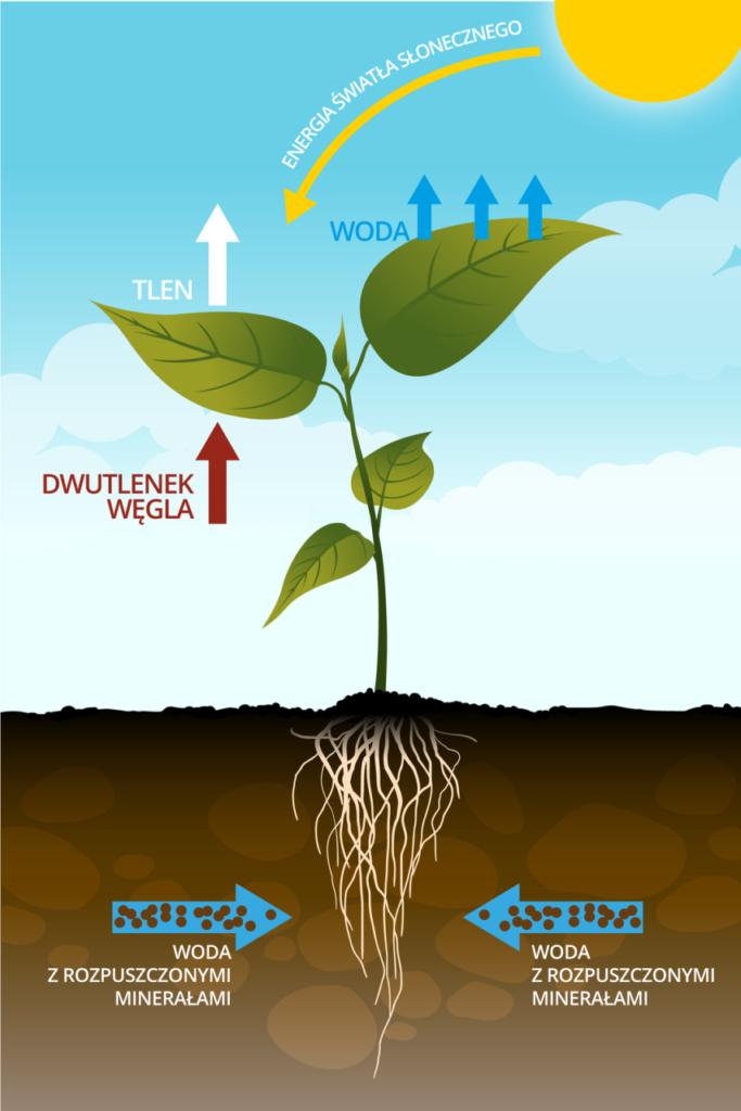 grafika jak rosną rośliny